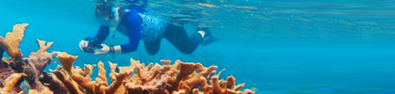 Snorkeling the Healthy Coral Reefs of Cuba!
